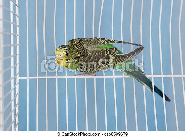 Pet Bird - csp8599679