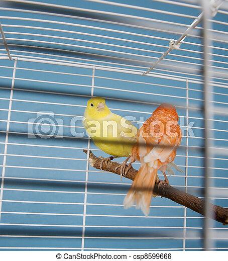 Pet Birds - csp8599666