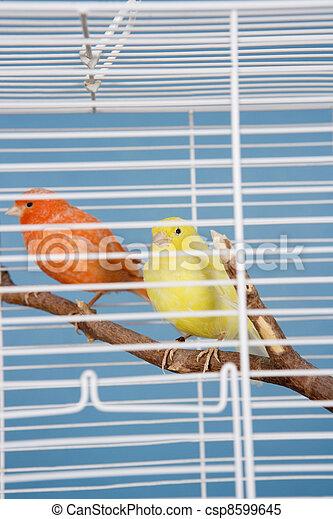 Pet Birds - csp8599645