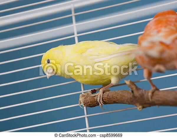 Pet Birds - csp8599669