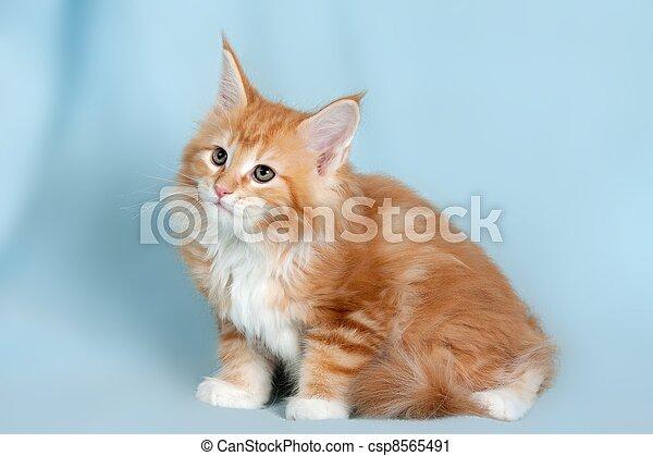 Pet cat - csp8565491