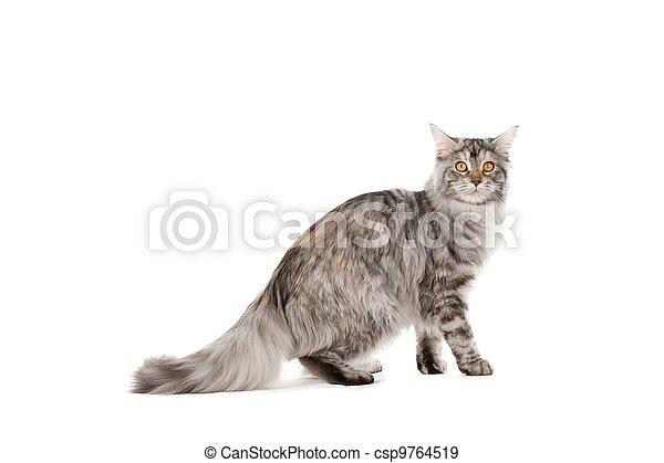 Pet cat - csp9764519