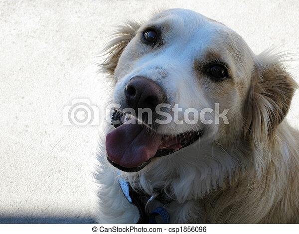 Pet dog - csp1856096