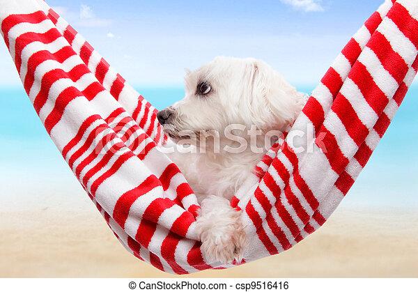 Pet dog summer holiday  - csp9516416