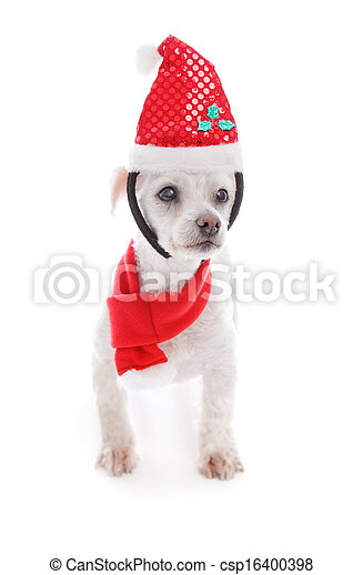 Pet dog wearing  Christmas headband and scarf - csp16400398