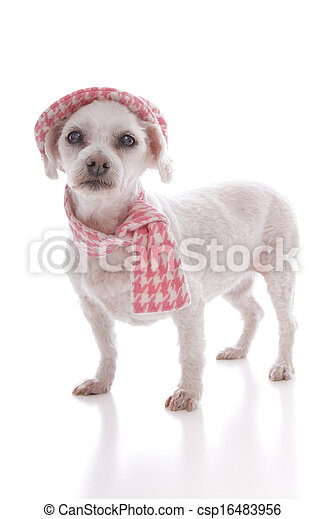 Pet dog wearing winter hat and scarf - csp16483956