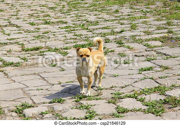 Pet dogs in the broken ground - csp21846129