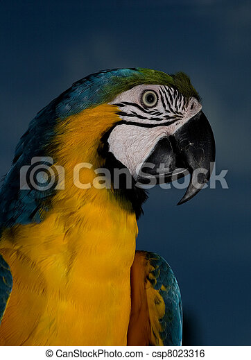 Pet Parrot Talking Blue And Gold Parrot That Has Blue Sky Behind