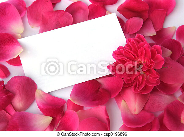 Petals on white - csp0196896