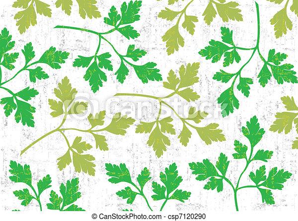 peterselie, achtergrond, white. - csp7120290