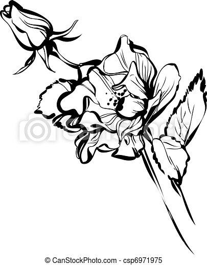 Petit grand rose bourgeonne beau fleur noir blanc - Dessin bourgeon ...
