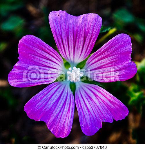 petit, mauve-clair, fleur