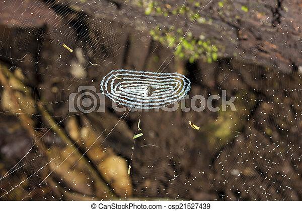 petit, toile, centre, araignés - csp21527439
