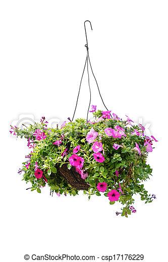 Petunia flower - csp17176229