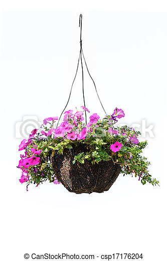 Petunia flower hanging basket with a petunia flower isolated on a petunia flower csp17176204 mightylinksfo