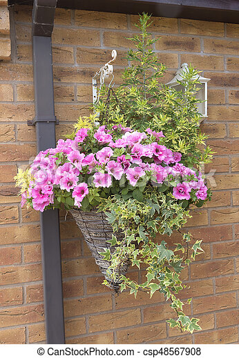 Super Petunia plants in a cone wicker hanging basket attatched to a wall  AJ45