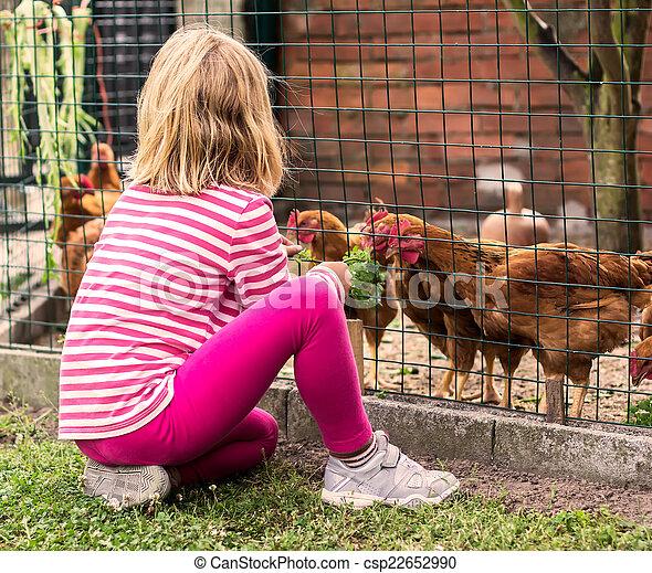 peu, alimentation, poules, girl - csp22652990