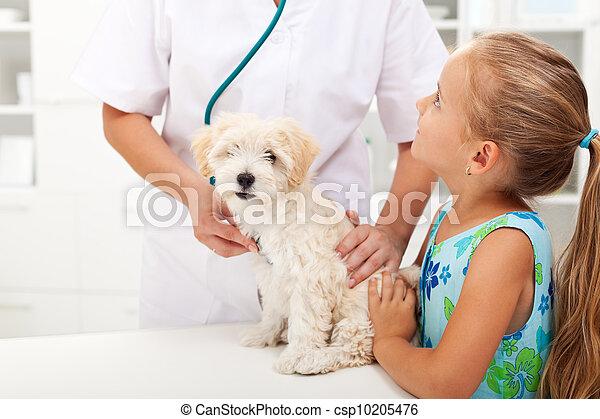 peu, elle, chouchou, pelucheux, vétérinaire, girl - csp10205476