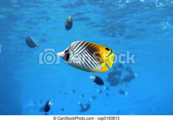 pez, ángel - csp0183813