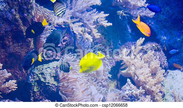 Pescado colorido - csp12066658