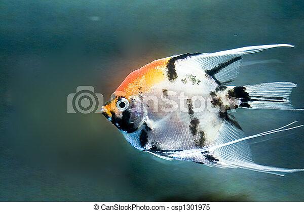 Pescado colorido - csp1301975