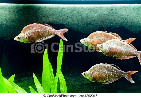 Pescado colorido - csp1302015