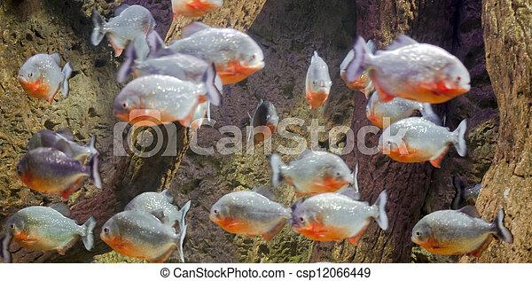 Pescado colorido - csp12066449