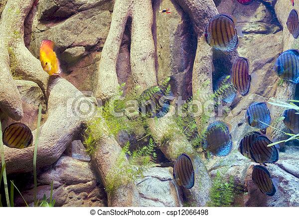 Pescado colorido - csp12066498
