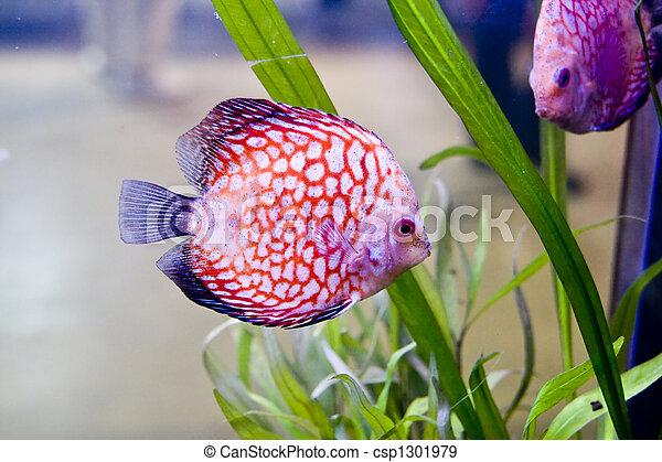 Pescado colorido - csp1301979