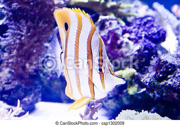 Pescado colorido - csp1302009