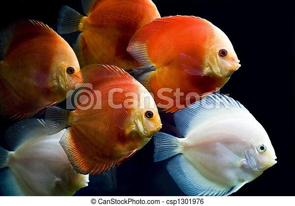 Pescado colorido - csp1301976