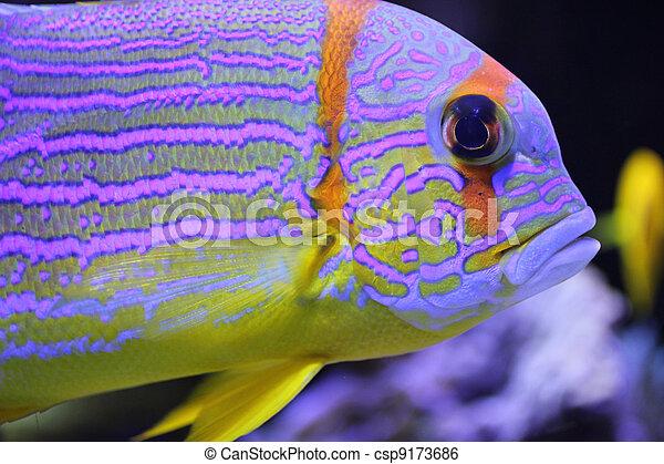 Pescado colorido - csp9173686