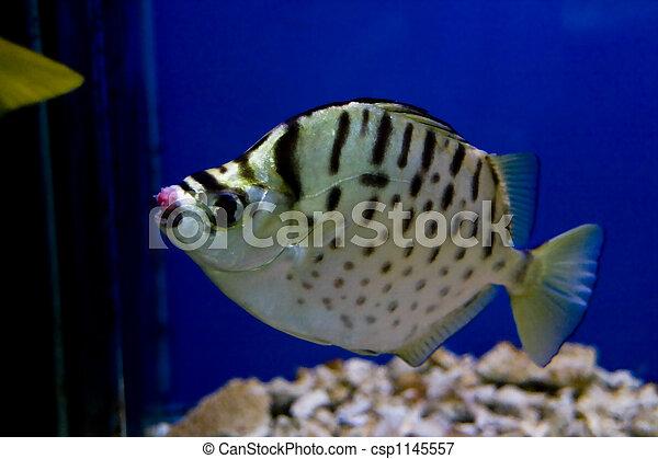 pez, colorido - csp1145557