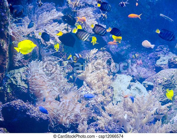 Pescado colorido - csp12066574