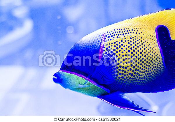Pescado colorido - csp1302021