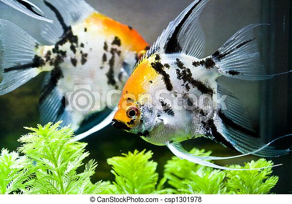 Pescado colorido - csp1301978