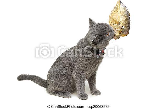 Kitten come pescado en un primer plano de fondo blanco. - csp20063878