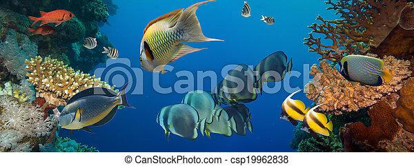 Coral y pescado - csp19962838