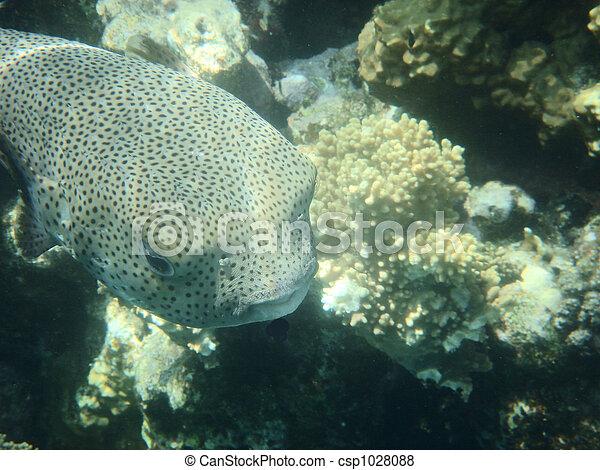Pescado coral - csp1028088