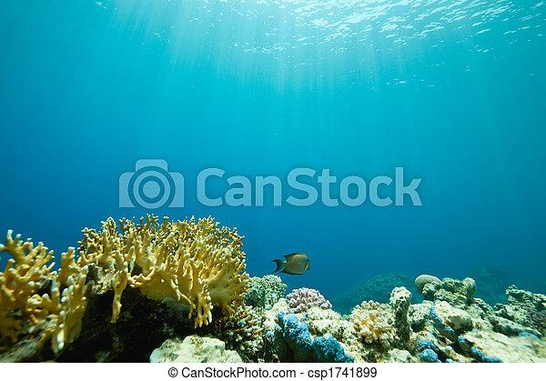 pez, coral, sha\'ab, alrededor, mahmud - csp1741899