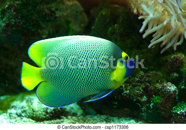 pez, marina - csp1173306