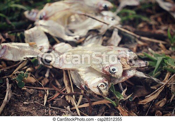 Pescado muerto - csp28312355