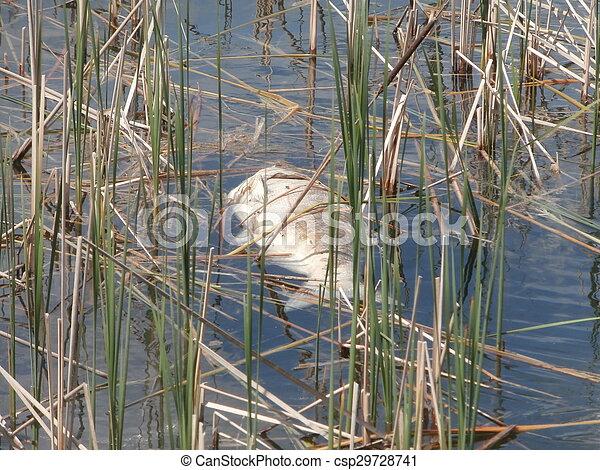 Pescado muerto - csp29728741