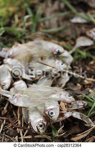 Pescado muerto - csp28312364