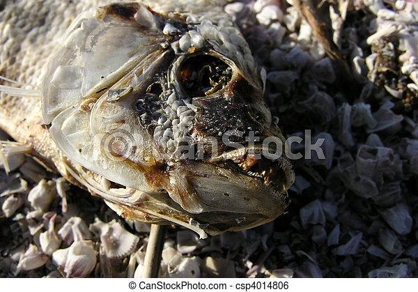 Pescado muerto - csp4014806