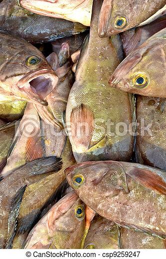 Pescado muerto - csp9259247