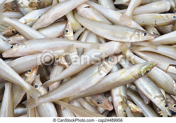 pez, smelts - csp24489956