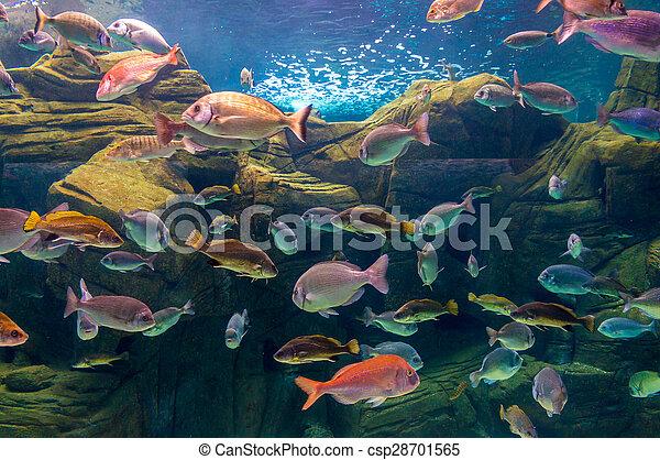 Pescado tropical en un arrecife de coral - csp28701565