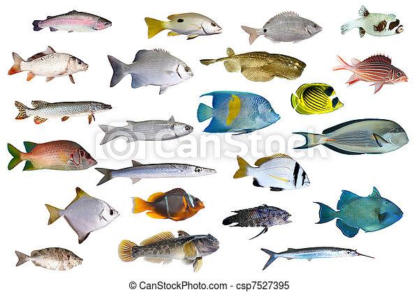 pez tropical, colección - csp7527395