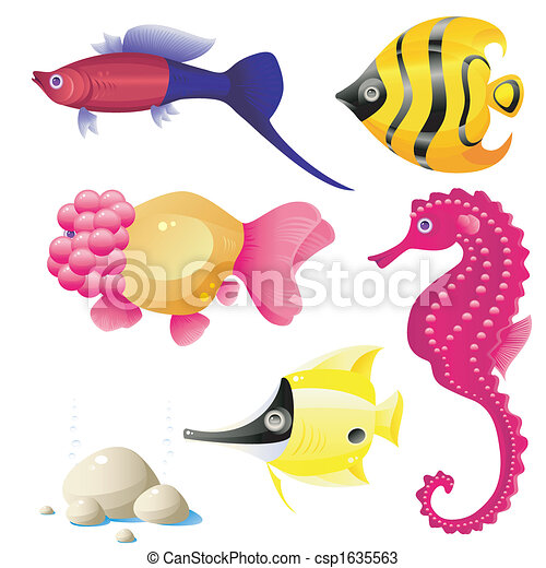 pez tropical - csp1635563